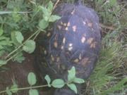 Turtle Sista2  2010