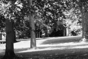 trees & path