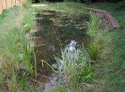 Pond Sept 10 '08
