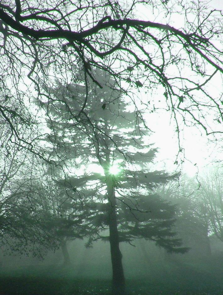 St Andrews Park  Dec 06