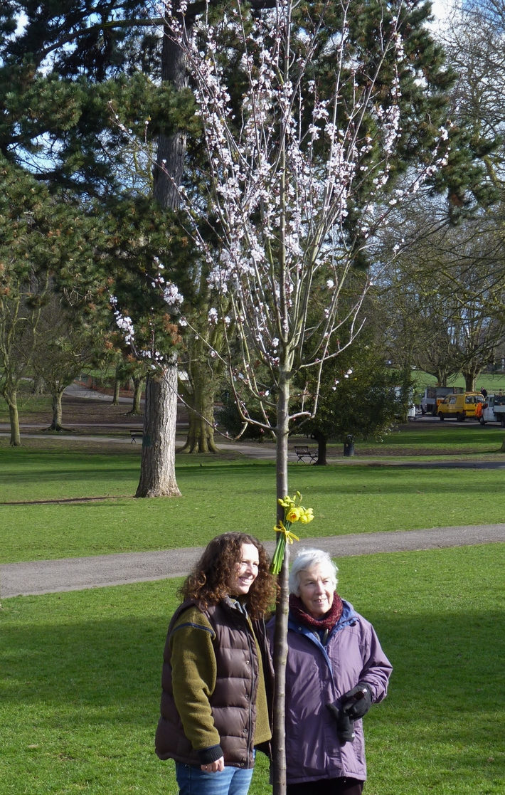 Memorial tree for Kerry's dad - a Cherry-Plum or Myrobalan. March 13th '13