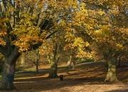 Late autumn sunshine, Nov 14th '12