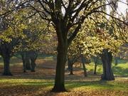 Park in autumn sunlight, Nov 14th '12