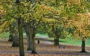 Autumn park scene, Oct 25th '12