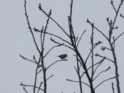 #Bird W StAP 3 May (7)
