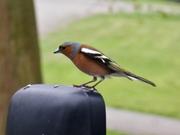 Bird Watch (13)