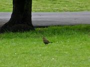 Bird Watch (3)