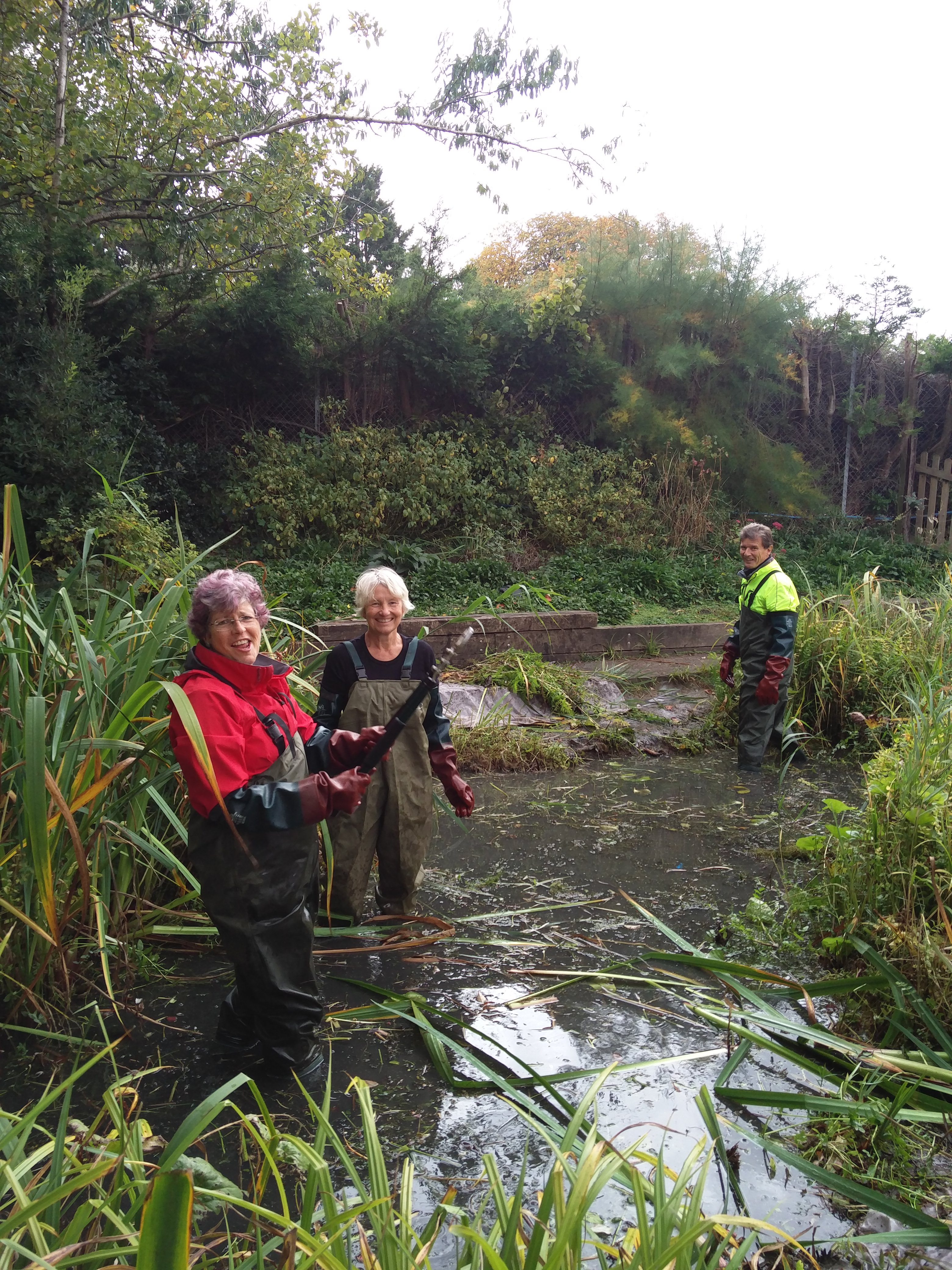 Pond Clearing
