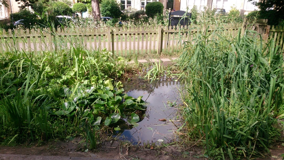 The wildlife pond after some water plants were removed