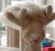chat endormi _ renversé