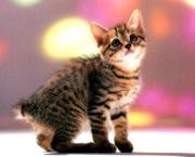 images-chatons-peq