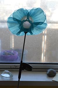 Sophia Construct as Blue Brighton Flower