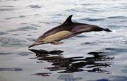 3614_dolphin_army-5_04700300