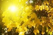 SunLightandLeafs