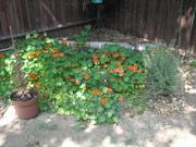 Garden_picts 029