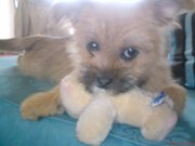 Honey with Teddy