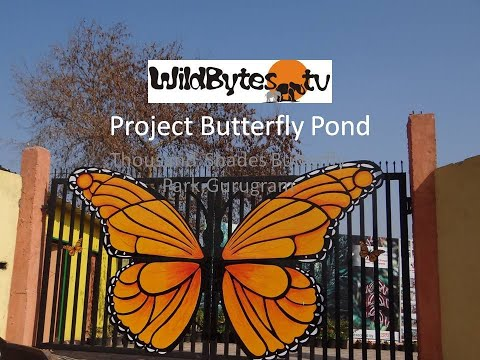 Project Butterfly Pond in Thousand Shades Butterfly park in Gurugram