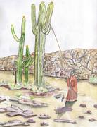 Papago Indian Picking Sagahuro Cactus Flowers done in Spring
