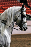 Arabian Horse Show June 2008
