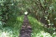 SMJ Trackbed Bidford 22 June 2014 002a