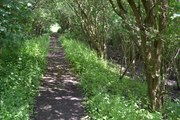 SMJ Trackbed Bidford 22 June 2014 003a