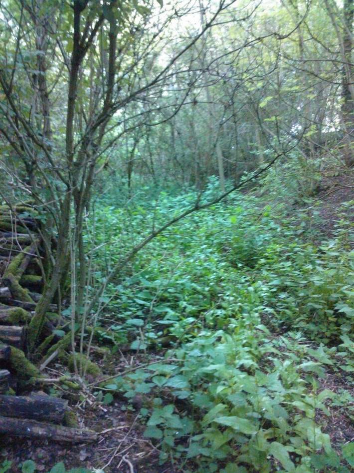 Tiffield Halt - Looking East Towards Blisworth