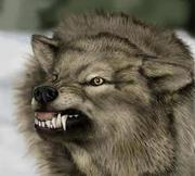 gnarling wolf, you go, bro