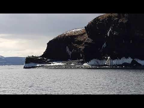 Cormorants in CBS Newfoundland