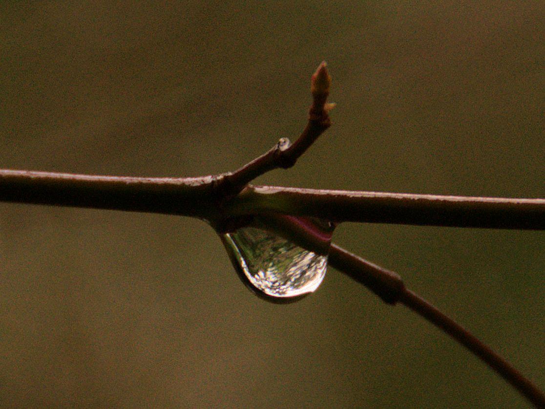 rain drop to water