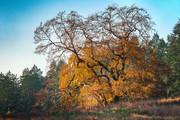 Fall colours. Burgoyne valley.