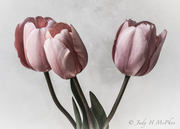 Large 3 Tulips toned