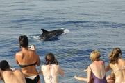 Observando Golfinhos Roaz