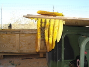 Another view:  Swarm settles in the Las Cruces National Guard box bound for Iraq