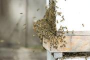 swarm_cluster_at_entrance