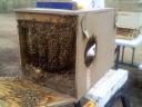 Gunny's Bee Adventures