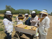 Mentoring at Open Space Group Bee Yard