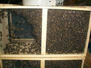 bee packages, #bees, #queen, #queens, #bee hives, #swarm of bees, #swarm