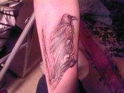 Lovisa's Raven