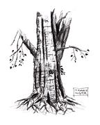 Pipal tree @ NGMA