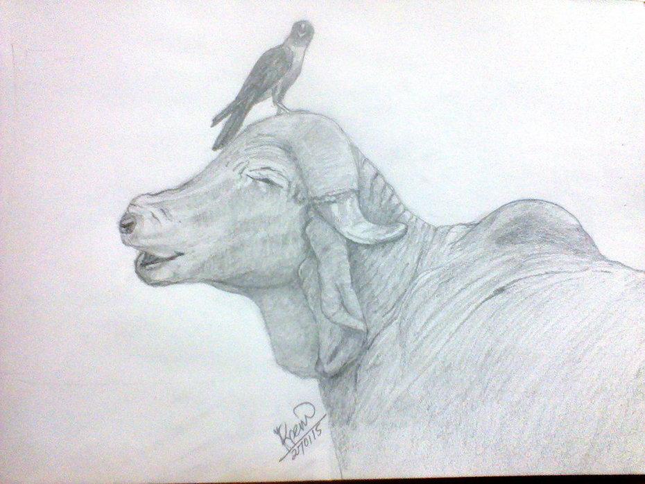 Buffalo & Crow
