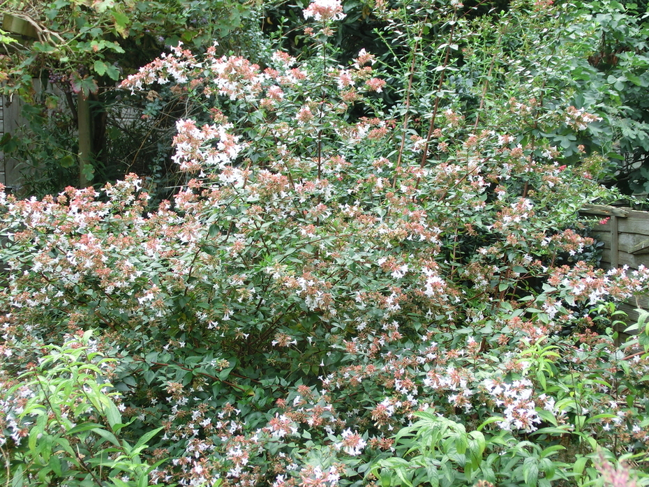 late flowering something or other19/8/2014