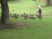 hanging out with the ducks today  .(*´◡`*)