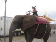 elephant ride!! ღ♥