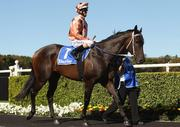 black caviar 27 wins 27 starts aussie champion racer no 7