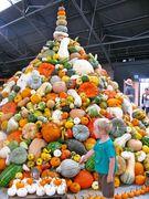 Pumpkins, Squash Oh My!