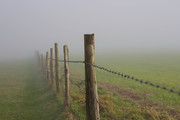 Misty Moments: South Downs ramble, 6th January 2013