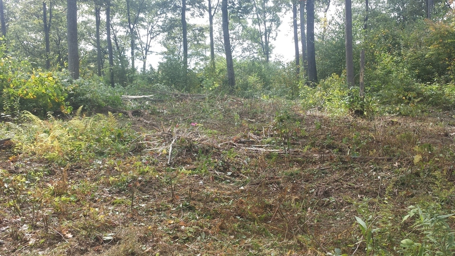 stand 5-1 timber ax 20150926_132402