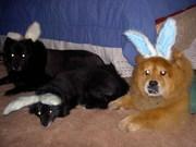 Easter 2005 066