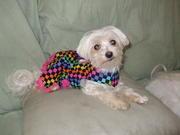 Precious in her Mardi Gras dress 2
