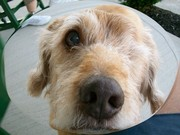 My Rusty!